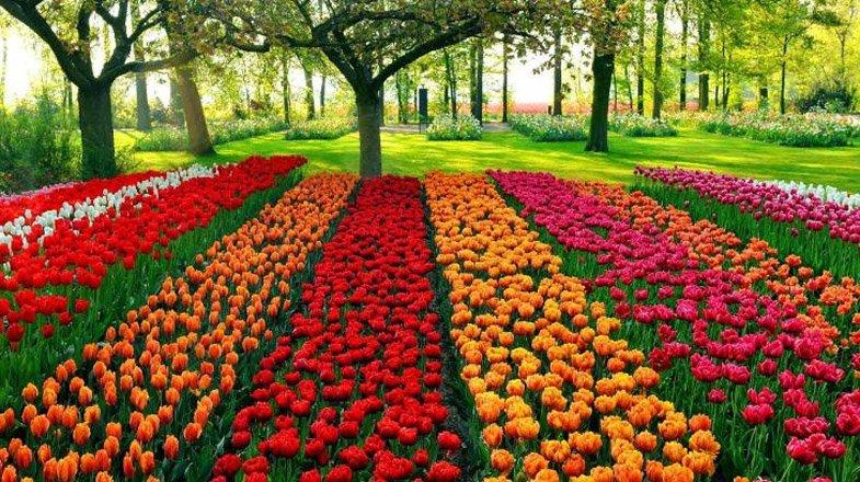 सभी धर्म किसी बड़े वृक्ष के फल व फूल है ?