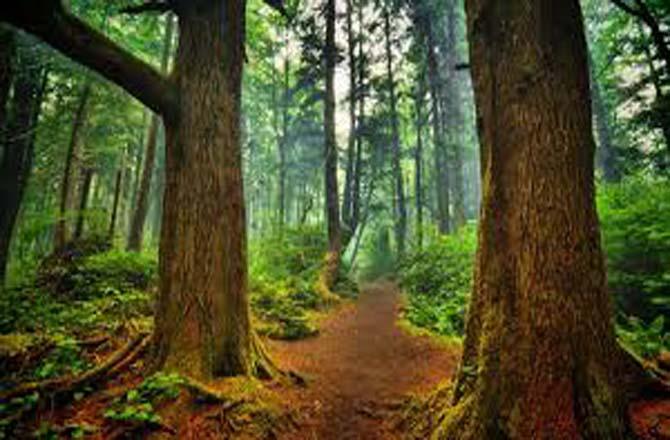 जंगल-जमीन और वनवासी