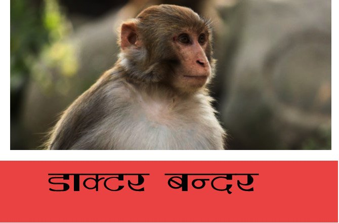 monkey-saves-his-partner-life-by-using-shock-treatment
