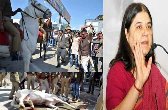मेनका ने घोड़े की टांग तोड़ने वाले MLA को पार्टी से बाहर करने की मांग की
