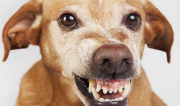 आवारा कुत्तों ने फिर एक मासूम बच्ची को बनाया अपना निवाला, अब तक 13 बच्चे हुए मौत के शिकार