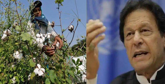 Pakistan: इमरान कैबिनेट ने ईसीसी के प्रस्ताव को खारिज किया, भारत से कपास और चीनी आयात पर प्रतिबंध जारी रहेगा