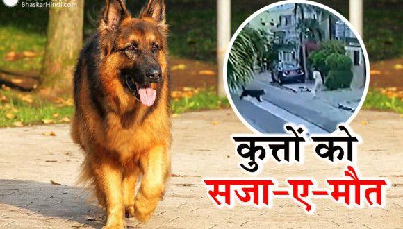 खूंखार पालतू कुत्तों ने वकील पर किया जानलेवा हमला, मिली सजा-ए-मौत, बार-बार देखा जा रहा वायरल वीडियो - bhaskarhindi.com